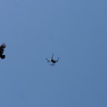Birds were attracted to the drone sometimes!
